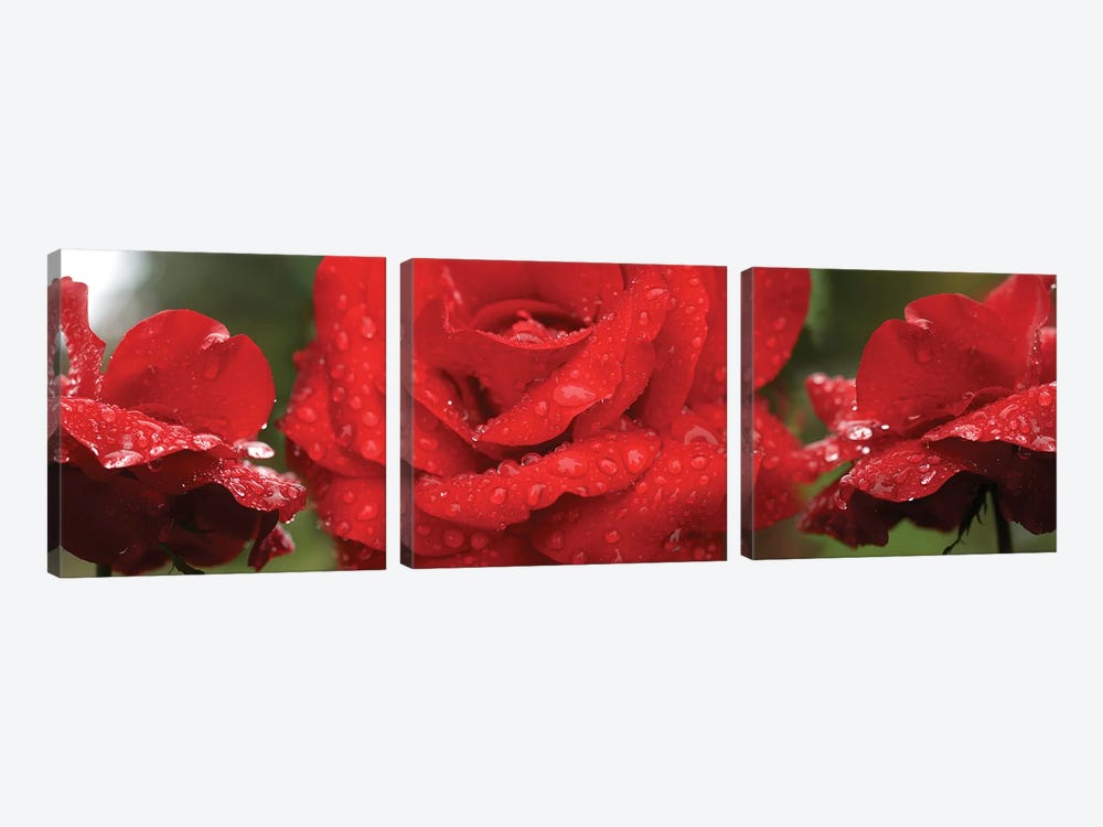 Raindrops On Red Rose Flowers by Panoramic Images 3-piece Canvas Art