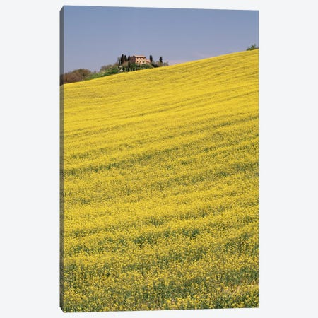 Rapeseed Field In Bloom, Tuscany, Italy Canvas Print #PIM14810} by Panoramic Images Canvas Art