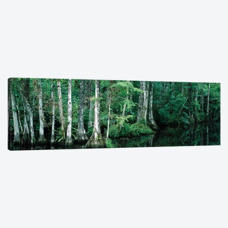 Reflection Of Trees In A Pond, Big Cypress National Preserve, Florida, USA Canvas Print #PIM14826} by Panoramic Images Canvas Artwork
