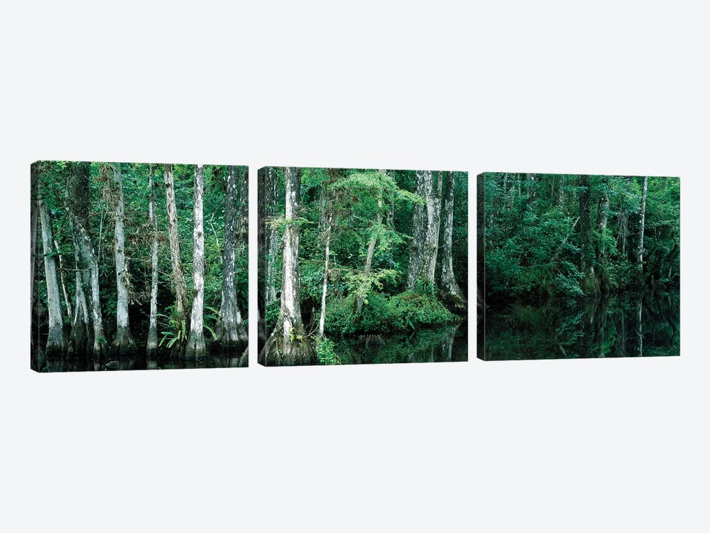 Reflection Of Trees In A Pond, Big Cypress National Preserve, Florida, USA by Panoramic Images 3-piece Canvas Print
