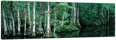 Reflection Of Trees In A Pond, Big Cypress National Preserve, Florida, USA Canvas Art Print