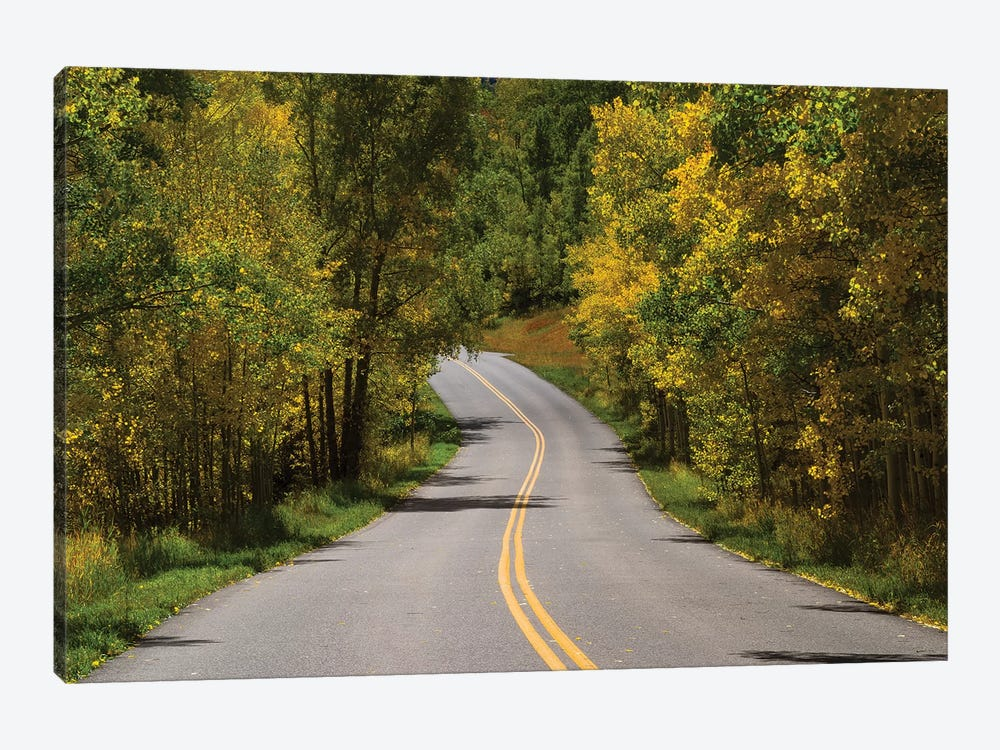Road Passing Through A Forest, Maroon Bells, Maroon Creek Valley, Aspen, Pitkin County, Colorado, USA I by Panoramic Images 1-piece Canvas Art Print