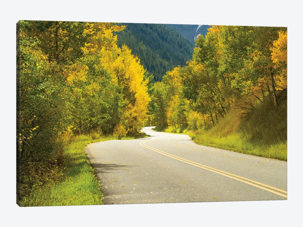 Road Passing Through A Forest, Maroon Bells, Maroon Creek Valley, Aspen, Pitkin County, Colorado, USA II 1-piece Canvas Artwork