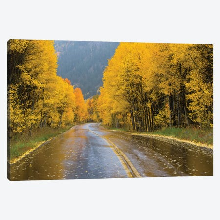 Road Passing Through A Forest, Maroon Bells, Maroon Creek Valley, Aspen, Pitkin County, Colorado, USA III Canvas Print #PIM14839} by Panoramic Images Canvas Art