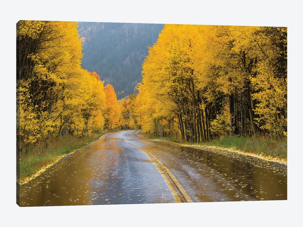 Road Passing Through A Forest, Maroon Bells, Maroon Creek Valley, Aspen, Pitkin County, Colorado, USA III by Panoramic Images 1-piece Art Print