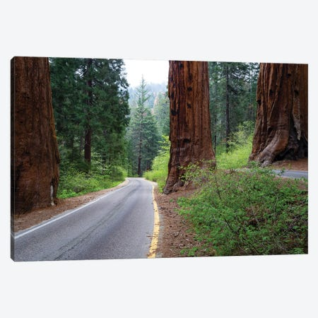 Road Passing Through A Forest, Sequoia National Park, California, USA Canvas Print #PIM14841} by Panoramic Images Canvas Print
