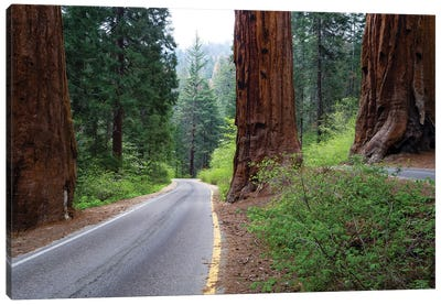 Road Passing Through A Forest, Sequoia National Park, California, USA Canvas Art Print