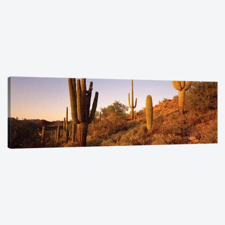 Saguaro Cactus On Hillside, Superstition Mountains, Arizona, USA Canvas Print #PIM14864} by Panoramic Images Canvas Art