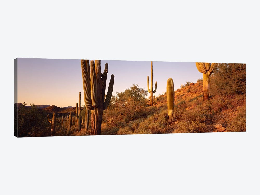 Saguaro Cactus On Hillside, Superstition Mountains, Arizona, USA by Panoramic Images 1-piece Canvas Art Print