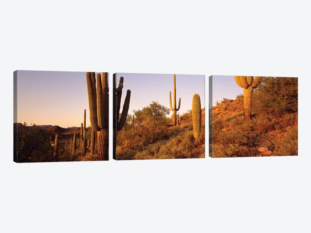 Saguaro Cactus On Hillside, Superstition Mountains, Arizona, USA by Panoramic Images 3-piece Art Print
