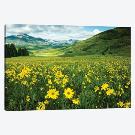 Scenic View Of Wildflowers In A Field, Crested Butte, Colorado, USA I Canvas Print #PIM14893} by Panoramic Images Canvas Artwork
