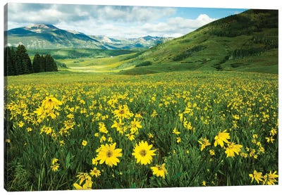 Scenic View Of Wildflowers In A Field, Crested Butte, Colorado, USA I Canvas Art Print