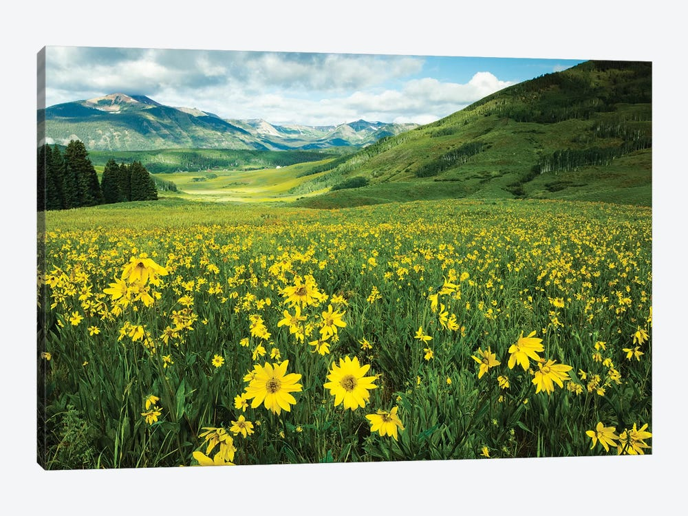 Scenic View Of Wildflowers In A Field, Crested Butte, Colorado, USA I by Panoramic Images 1-piece Canvas Print