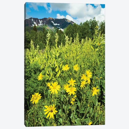 Scenic View Of Wildflowers In A Field, Crested Butte, Colorado, USA II Canvas Print #PIM14894} by Panoramic Images Art Print