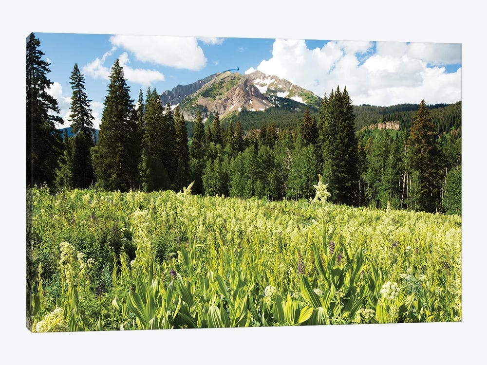 Scenic View Of Wildflowers In A Field, Crested Butte, Colorado, USA III by Panoramic Images 1-piece Art Print