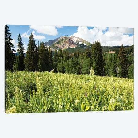 Scenic View Of Wildflowers In A Field, Crested Butte, Colorado, USA III Canvas Print #PIM14895} by Panoramic Images Art Print