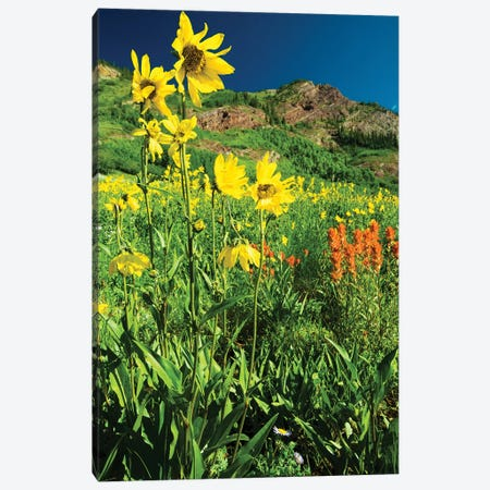 Scenic View Of Wildflowers In A Field, Crested Butte, Colorado, USA IV Canvas Print #PIM14896} by Panoramic Images Canvas Art Print