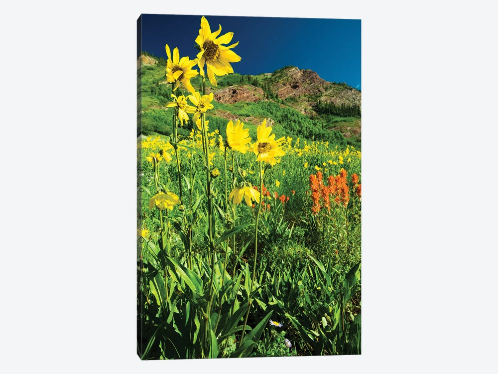 Scenic View Of Wildflowers In A Field, Crested Butte, Colorado, USA IV by Panoramic Images 1-piece Canvas Wall Art