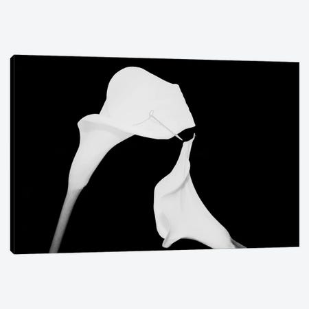 Still Life Shot Of Pierced Calla Lily Flower II Canvas Print #PIM14937} by Panoramic Images Canvas Artwork