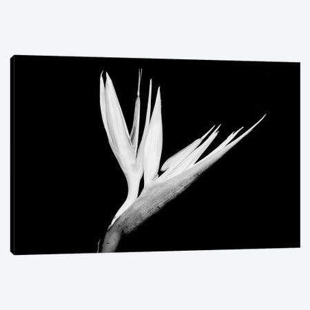 Still-Life Shot Of A Bird Of Paradise Flower Canvas Print #PIM14938} by Panoramic Images Canvas Print