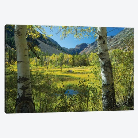 Tree With Mountain Range In The Background, Virginia Lakes, Bishop Creek Canyon, California, USA Canvas Print #PIM14966} by Panoramic Images Art Print