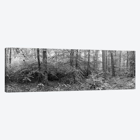 Trees In A Forest, Baden-Württemberg, Germany Canvas Print #PIM14973} by Panoramic Images Art Print