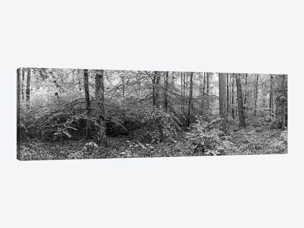 Trees In A Forest, Baden-Württemberg, Germany by Panoramic Images 1-piece Canvas Wall Art