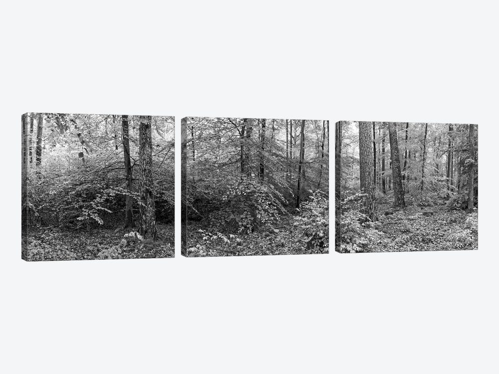 Trees In A Forest, Baden-Württemberg, Germany by Panoramic Images 3-piece Canvas Art