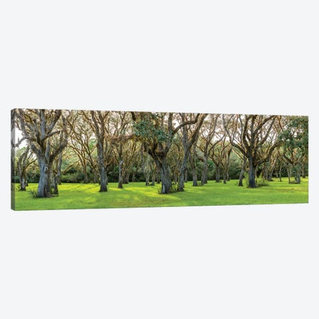 Trees In A Park, Florida, USA Canvas Print #PIM14975} by Panoramic Images Canvas Art