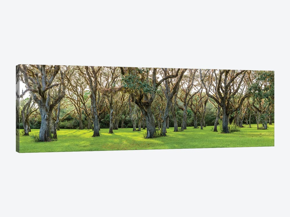 Trees In A Park, Florida, USA by Panoramic Images 1-piece Canvas Art
