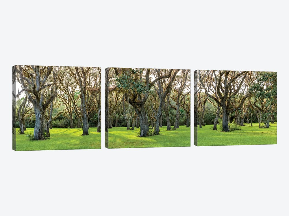Trees In A Park, Florida, USA by Panoramic Images 3-piece Canvas Wall Art