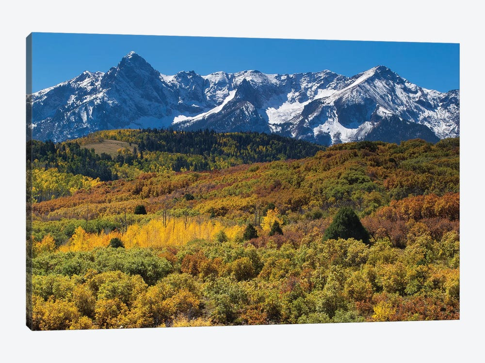 Trees With Mountain Range In The Background, Aspen, Pitkin County, Colorado, USA I by Panoramic Images 1-piece Canvas Wall Art