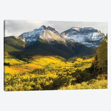 Trees With Mountain Range In The Background, Aspen, Pitkin County, Colorado, USA II Canvas Print #PIM14980} by Panoramic Images Canvas Artwork