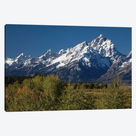 Trees With Mountain Range In The Background, Teton Range, Grand Teton National Park, Wyoming, USA Canvas Print #PIM14984} by Panoramic Images Canvas Print