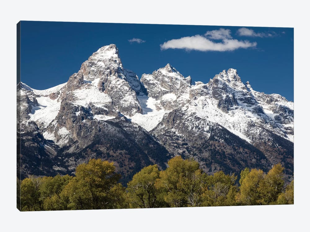 Trees With Mountain Range In The Background, Teton Range, Grand Teton National Park, Wyoming, USA I by Panoramic Images 1-piece Canvas Print