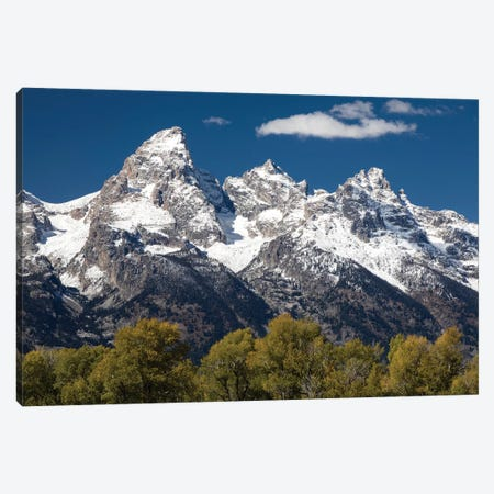 Trees With Mountain Range In The Background, Teton Range, Grand Teton National Park, Wyoming, USA I Canvas Print #PIM14985} by Panoramic Images Canvas Art Print