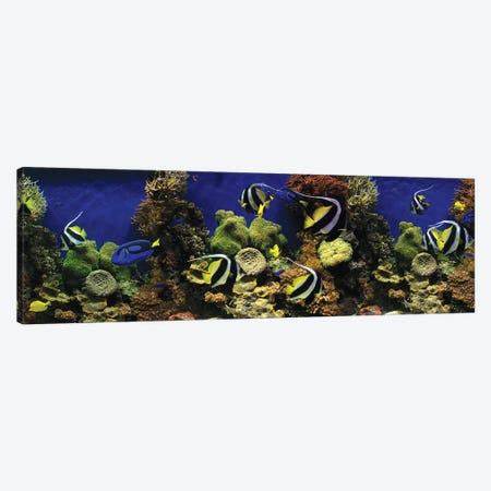 Tropical Fish Swimming Underwater Among The Coral Canvas Print #PIM14989} by Panoramic Images Canvas Art
