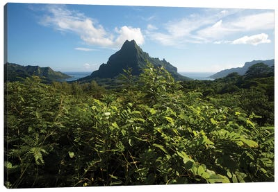View Of Mountain Peaks, Moorea, Tahiti, French Polynesia II Canvas Art Print