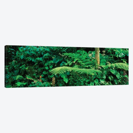 View Of Rainforest, Papillote Wilderness Retreat And Nature Sanctuary, Dominica, Caribbean I Canvas Print #PIM15004} by Panoramic Images Art Print