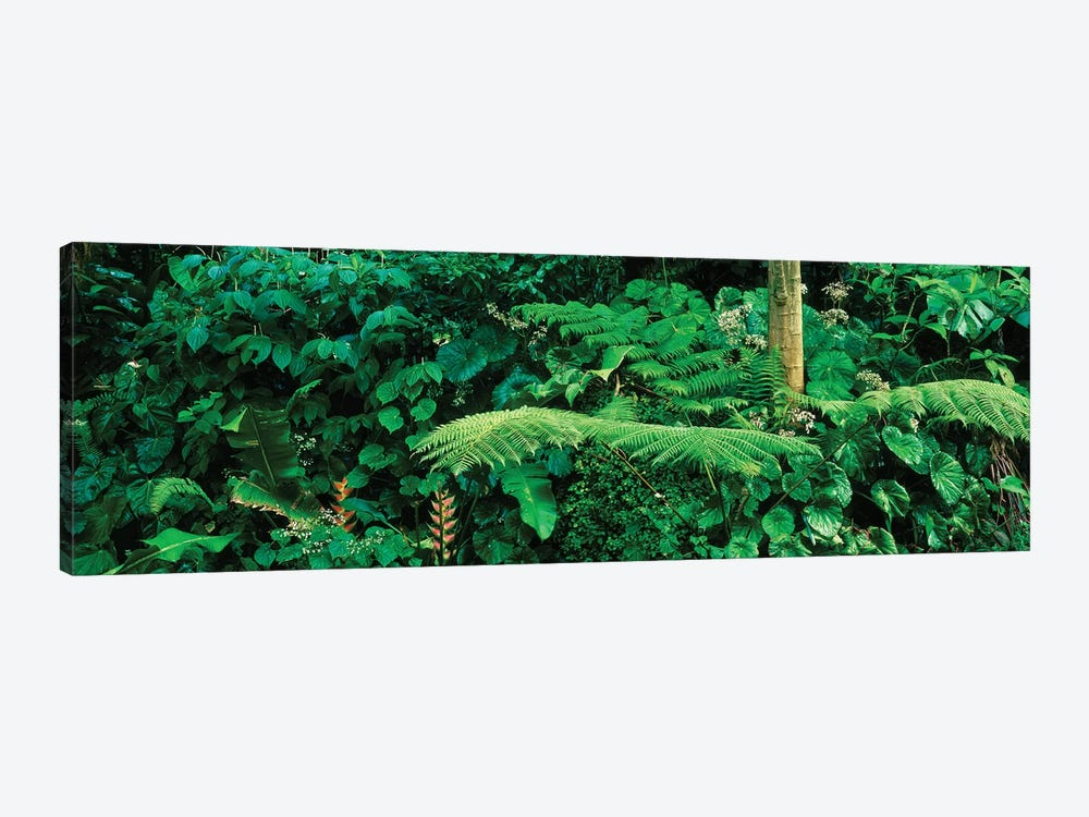 View Of Rainforest, Papillote Wilderness Retreat And Nature Sanctuary, Dominica, Caribbean I by Panoramic Images 1-piece Canvas Wall Art