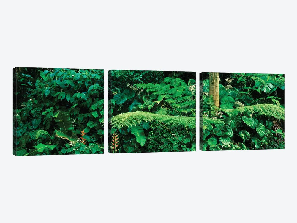 View Of Rainforest, Papillote Wilderness Retreat And Nature Sanctuary, Dominica, Caribbean I by Panoramic Images 3-piece Canvas Wall Art