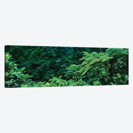 View Of Rainforest, Papillote Wilderness Retreat And Nature Sanctuary, Dominica, Caribbean II Canvas Print #PIM15005} by Panoramic Images Art Print