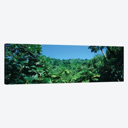 View Of Rainforest, Papillote Wilderness Retreat And Nature Sanctuary, Dominica, Caribbean IV Canvas Print #PIM15007} by Panoramic Images Canvas Art Print