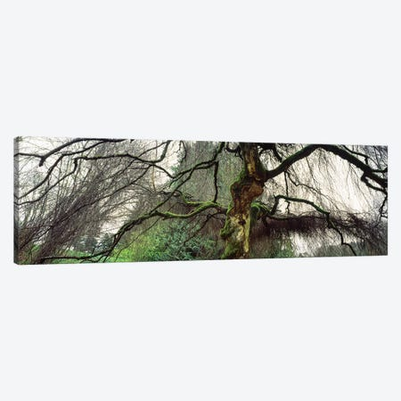 Washington Park, Seattle, Washington State, USA II Canvas Print #PIM15014} by Panoramic Images Canvas Wall Art