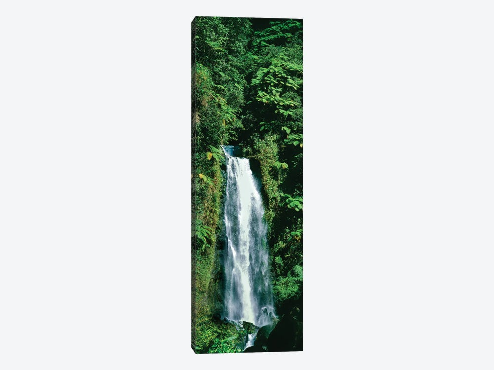 Waterfall In A Forest, Mother Falls, Trafalgar Falls, Dominica, Caribbean by Panoramic Images 1-piece Canvas Art Print