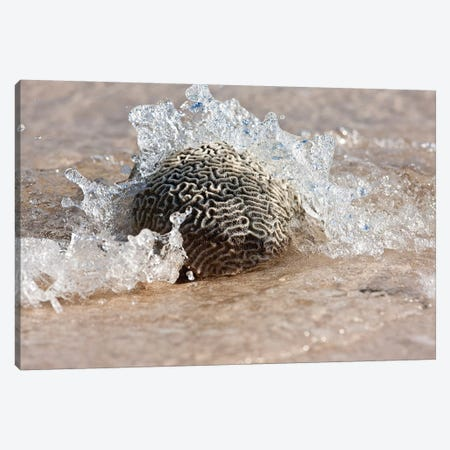 Waves Crashing On A Piece Of Coral, Culebra Island, Puerto Rico Canvas Print #PIM15031} by Panoramic Images Canvas Art Print