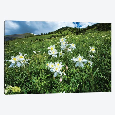 Wildflowers Growing In A Field, Crested Butte, Colorado, USA Canvas Print #PIM15060} by Panoramic Images Canvas Art