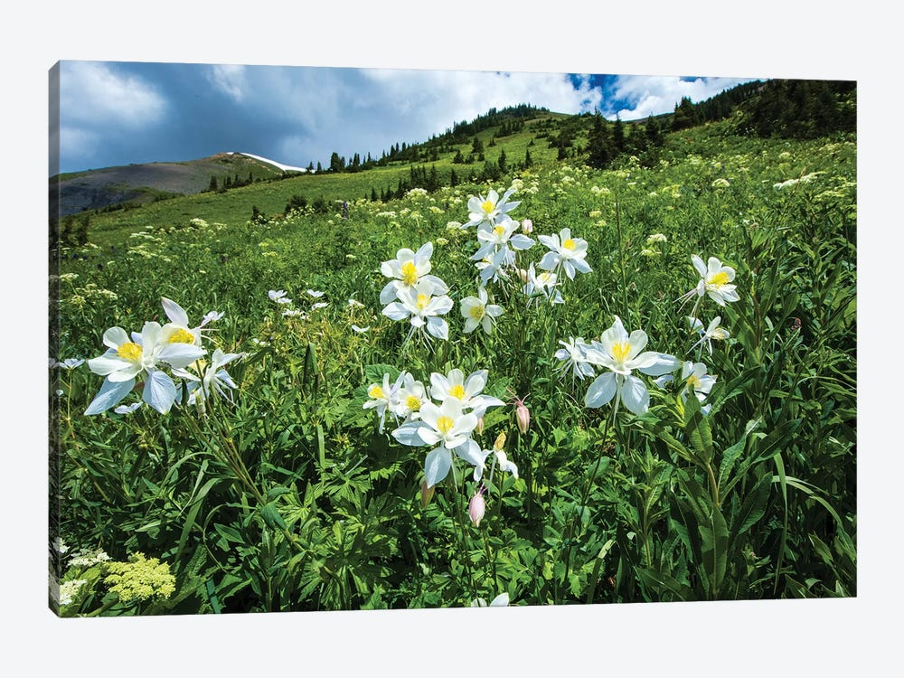 Wildflowers Growing In A Field, Crested Butte, Colorado, USA by Panoramic Images 1-piece Canvas Artwork