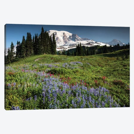 Wildflowers On A Hill, Mount Rainier National Park, Washington State, USA I Canvas Print #PIM15064} by Panoramic Images Art Print