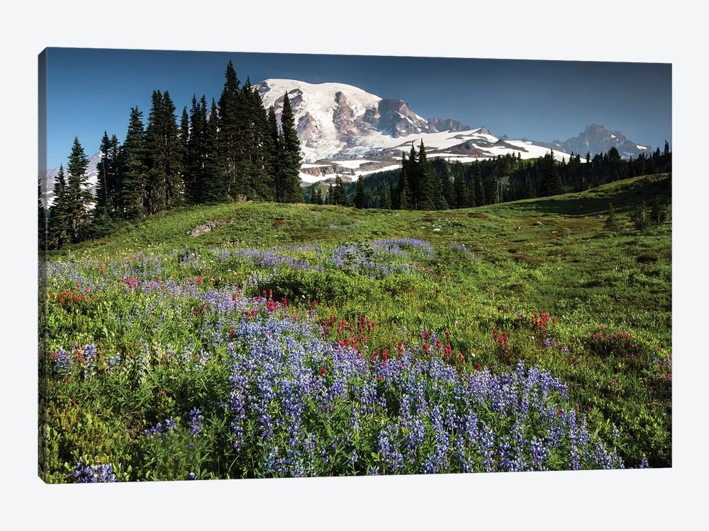 Wildflowers On A Hill, Mount Rainier National Park, Washington State, USA I by Panoramic Images 1-piece Canvas Art